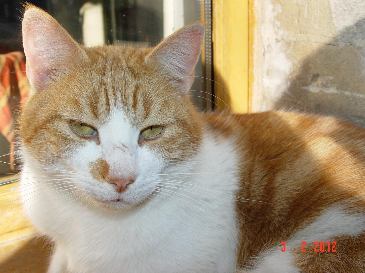 louviers chat sites Vous achetez 1 seul sachet et non pas tout ce qui est présent sur la photo - 1 chienou un chat (les objets neufs devront êtres encore emballés) ) 14,50 eur.